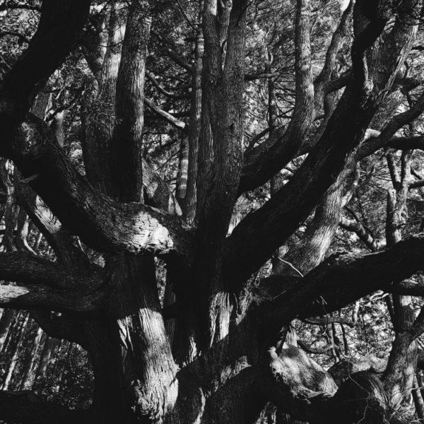 高森殿の杉 阿蘇 熊本